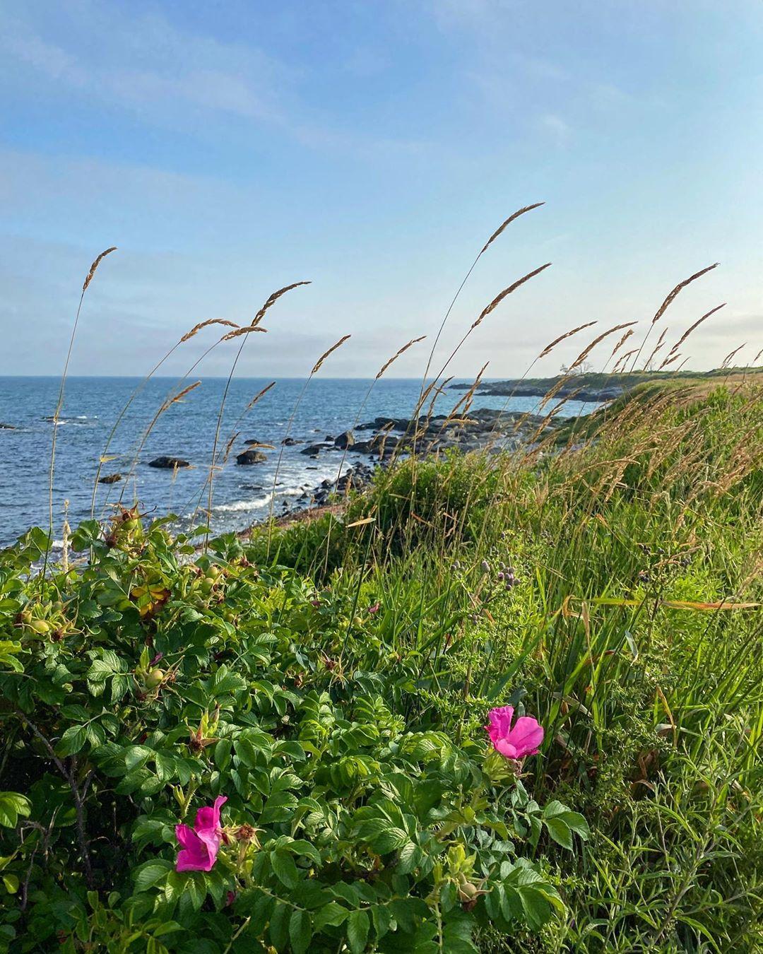 Sachuest Point in Rhode Island